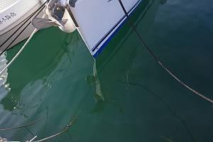 Fotografie von Wasser mit einer Spiegelung eines Bootes.