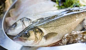 Frisch gefangener Zander auf Fischplatte