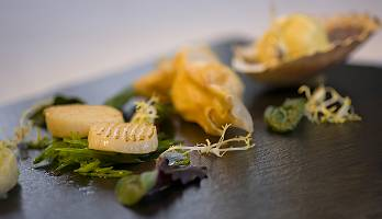 Jakobsmuscheln an Algen serviert auf Schiefer