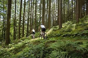 Mountainbiker auf Trail im Wald