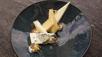 Verschiedene Käsesorten angerichtet auf einem dunkel türkisen