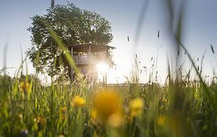 Aussichtsturm bei Blindheim durch Gräser in der Morgensonne fot