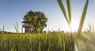 Aussichtsturm bei Blindheim durch Gräser im Gegenlicht in der M