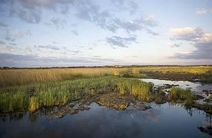 Fotografie über die Moorlandschaft am Federsee im Hintergrund d