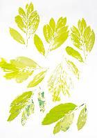 Grüne Abdrucke eines Blattes