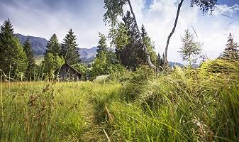 Alpenmoor in Oberjoch