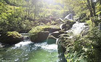 Wildbach in einem Wald