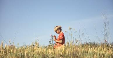 Kleiner Jungen steht in einem Getreidefeld und studiert eine Moh