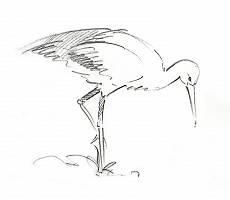 Bleistiftzeichnung eines Storchs