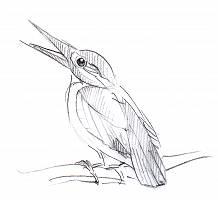 Bleistiftzeichnung eines Vogels, der auf einem Ast sitzt