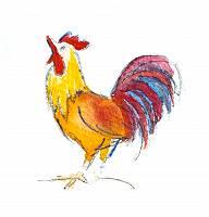 Aquarellzeichnung eines krähenden Hahns