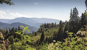 Schwarzwald mit Bergsicht