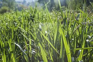 Gräser im Gegenlicht