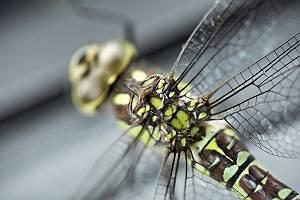 Makroaufnahme einer Libelle