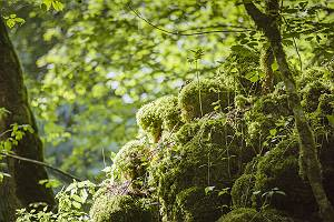Moosiger Waldboden