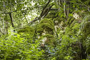 Bemooster felsiger Waldboden