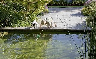 Ein Junge und sein Hund suchen nach Fischen im Teich