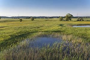 Aussicht von Aussichtstum in Blindheim über die Donauaue