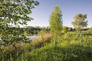 Naturlandschaft Donauaue mit See und üppigem Bewuchs in der Mor