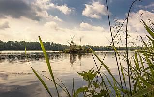 Teichlandschaft mit Wasservögeln