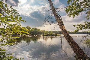 Teichlandschaft mit Schwänen