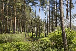 Waldgebiet in Heidelandschaft