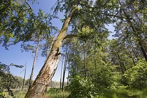 Bäume in Heidelandschaft