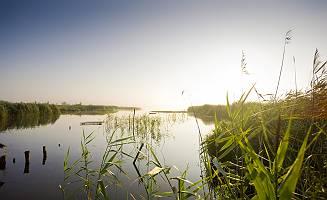Morgenstimmung am Federsee mit Ufer