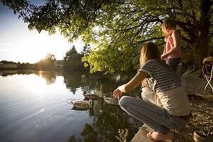 Familie betrachtet Schwanenfamilie im See