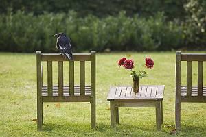 Krähe sitzt auf einem Stuhl
