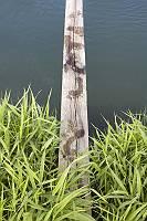 Nasse Fußabdrücke auf einem Holzbrett über Wasser