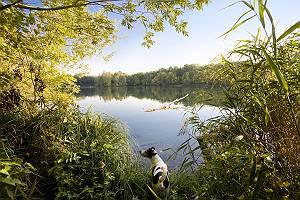 Hund steht neugierig am Ufer eines Sees