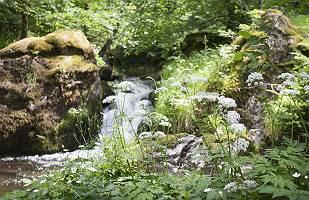 Wildbach in verwildertem Waldabschnitt mit Findlingen