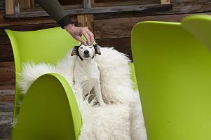 Entspannter Hund wird auf auf einem Sessel gestreichelt