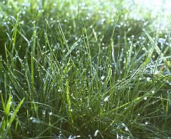 Wassertropfen auf Gras