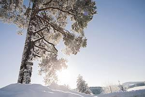 Schneelandschaft mit vereistem baum im Gegenlicht