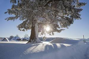 Sonnige Schneelandschaft mit Baum