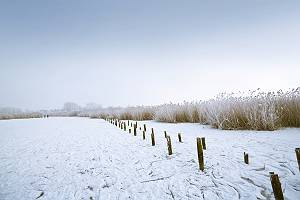 Gefrorener Federsee und Schilfufer im Winter