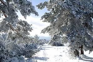 Winterlandschaft an einem sonnigen Wintertag
