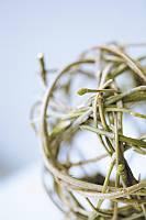 Fotografie einer Flechtkugel aus Zweigen vor weißem Hintergrund