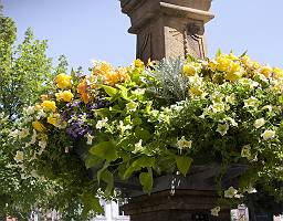 Blumenschmuck am Marktbrunnen
