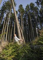 Geschäfftsmann reißt einen Baum aus