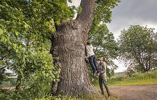Räuberleiter am Baum