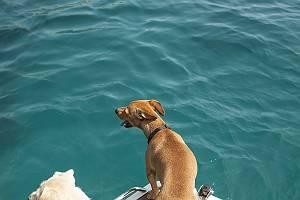 Urlaub für Hund