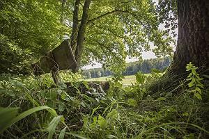 Holzbank im Reichenbachtal