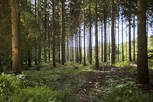 Waldlichtung im Wld Wildfang